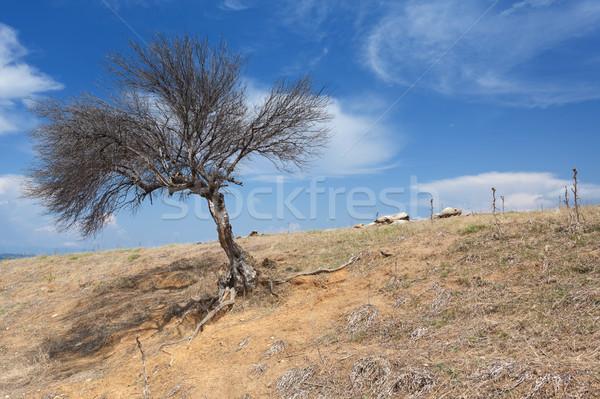 Einsamen toter Baum trocken leer Wasser Baum Stock foto © Escander81