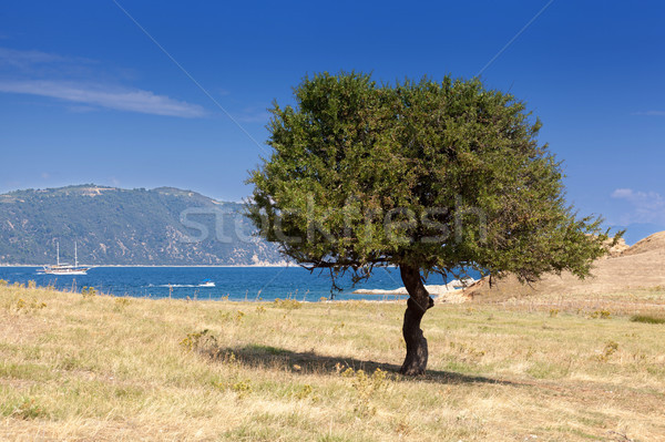 Lonely tree on a dry island Stock photo © Escander81