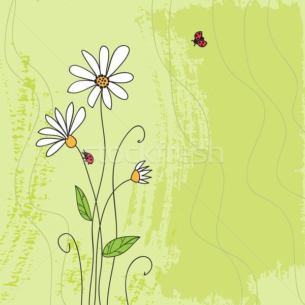 Ladybug on chamomile flower and grunge green grass background  Stock photo © ESSL