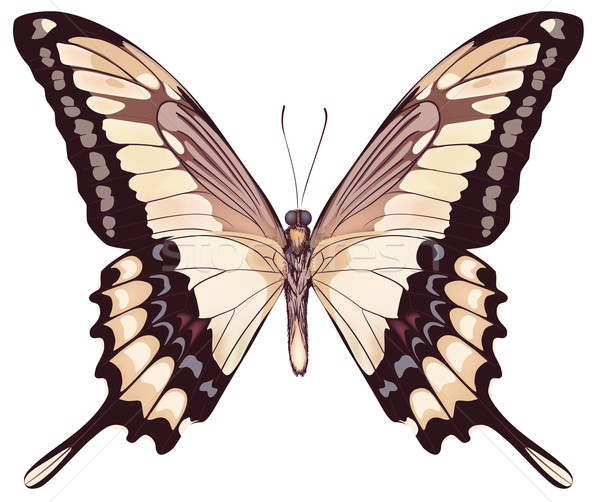 Isolated Light Butterfly VectorIllustration Stock photo © ESSL