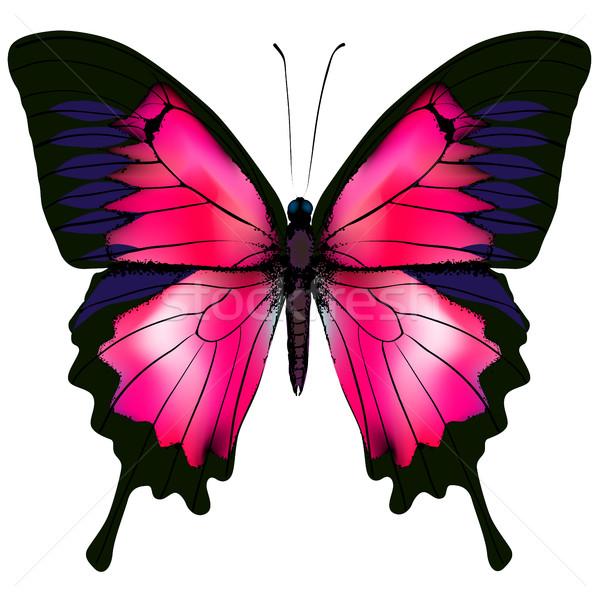 Papillon rouge isolé blanche belle fleur Photo stock © ESSL