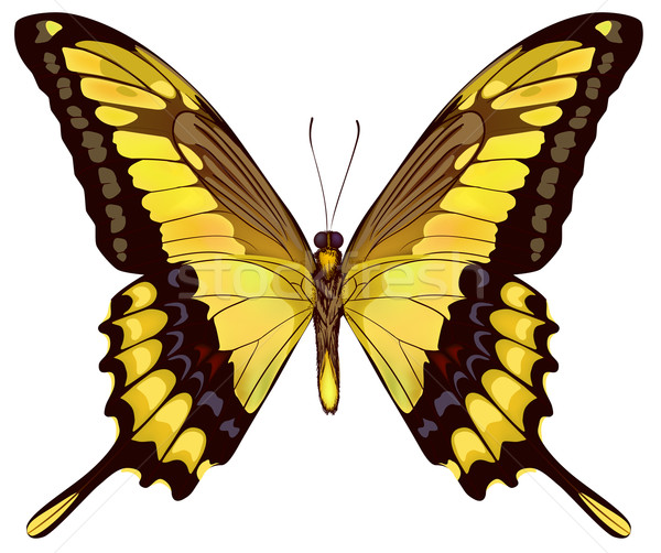 Isolated Yellow Butterfly VectorIllustration Stock photo © ESSL