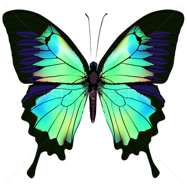 Butterfly vector illustration Stock photo © ESSL