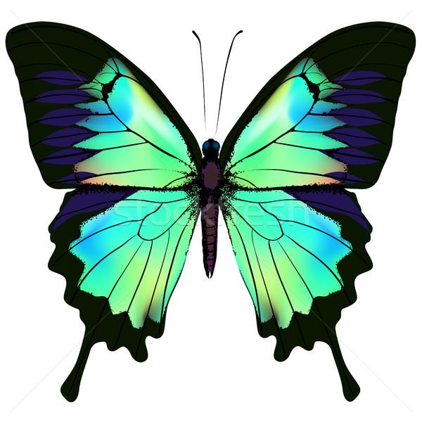 бабочка синий лазурный зеленый красочный красивой Сток-фото © ESSL
