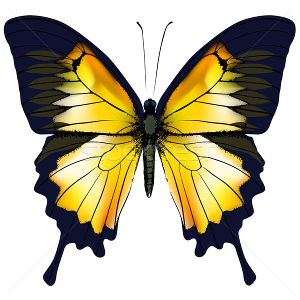 Butterfly. Yellow butterfly isolated illustration on white background Stock photo © ESSL
