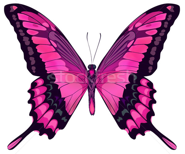 Vector Iillustration of Beautiful Pink Butterfly Isolated on Whi Stock photo © ESSL