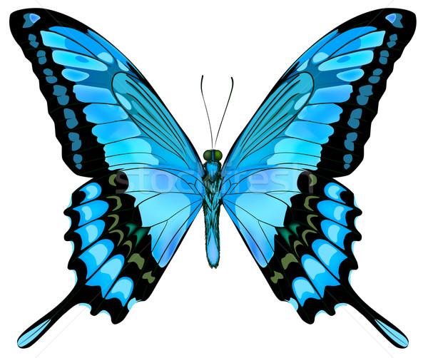 Hermosa vector aislado azul mariposa primavera Foto stock © ESSL