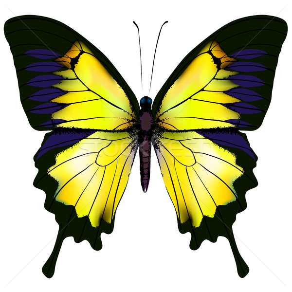 Vlinder Geel geïsoleerd illustratie witte zoölogie Stockfoto © ESSL