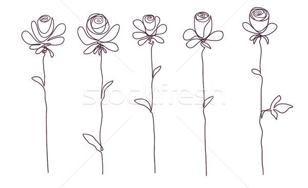 Roses ensemble isolé rose fleur croquis Photo stock © ESSL