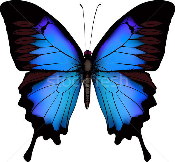 Blue butterfly papilio ulysses (Mountain Swallowtail) isolated v Stock photo © ESSL