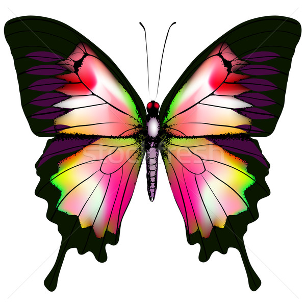 Isolated Butterfly Vector Stock photo © ESSL