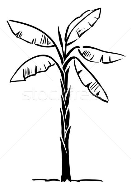 Tropikal hurma ağacı yalıtılmış beyaz vektör soyut Stok fotoğraf © ESSL