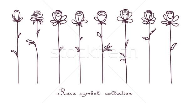 Rosas coleção isolado rosa flor esboço Foto stock © ESSL