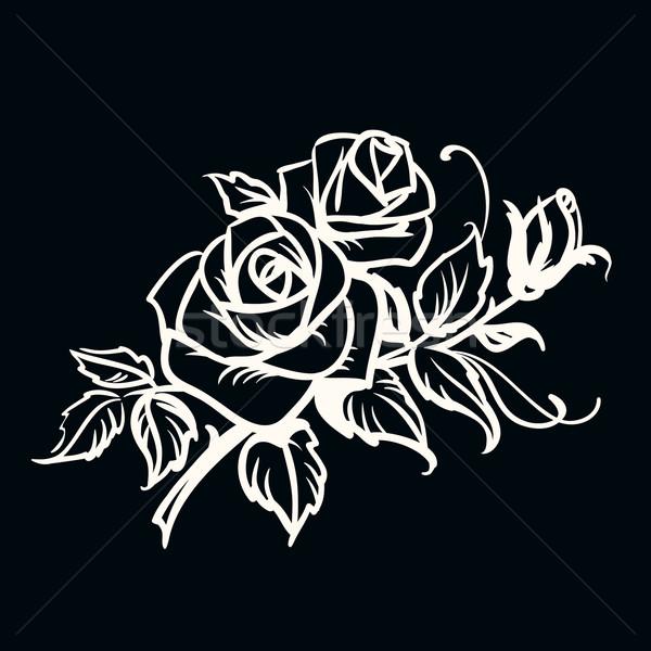 Roses blanche dessin noir lumière Photo stock © ESSL