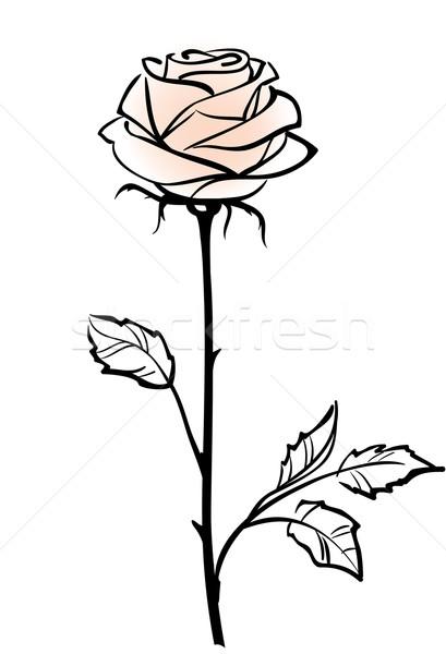 Bella fiore isolato bianco rosa Foto d'archivio © ESSL