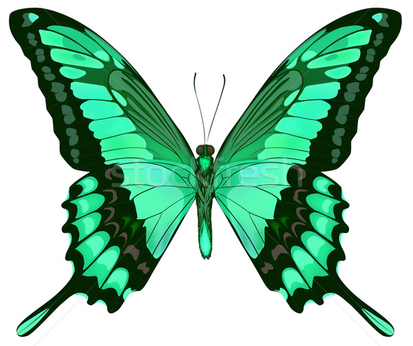Belo vetor isolado azul borboleta primavera Foto stock © ESSL