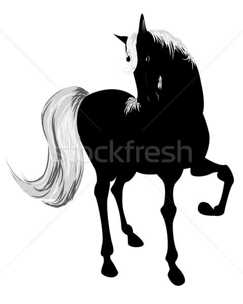 黒 馬 自由 白 無料 美しい ストックフォト © evetodew