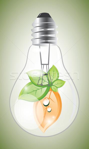 öko villanykörte növény narancs zöld levelek természet Stock fotó © evetodew