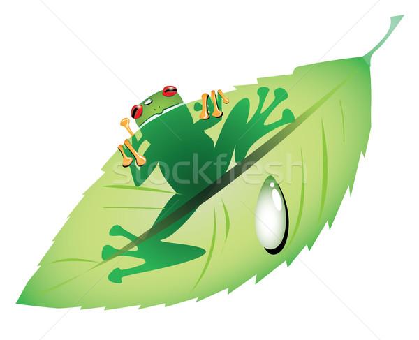 Stok fotoğraf: Kurbağa · yeşil · yaprak · yaprak · yeşil · ücretsiz · Rainforest