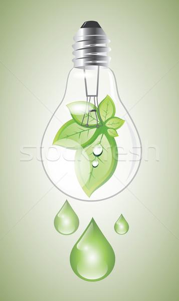 öko villanykörte zöld ökológiai növekvő növény Stock fotó © evetodew