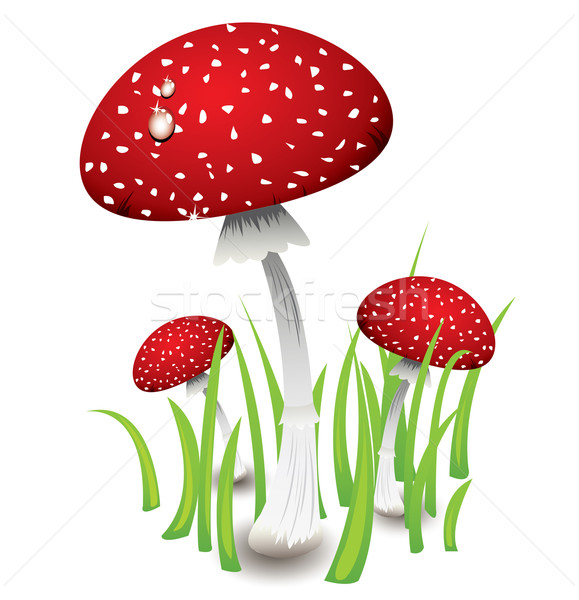 Három piros gombák zöld fű fű erdő Stock fotó © evetodew