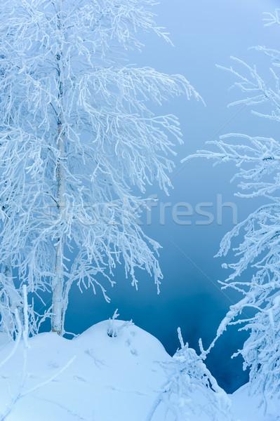 Tájkép fák fedett hó gyönyörű hideg Stock fotó © EvgenyBashta