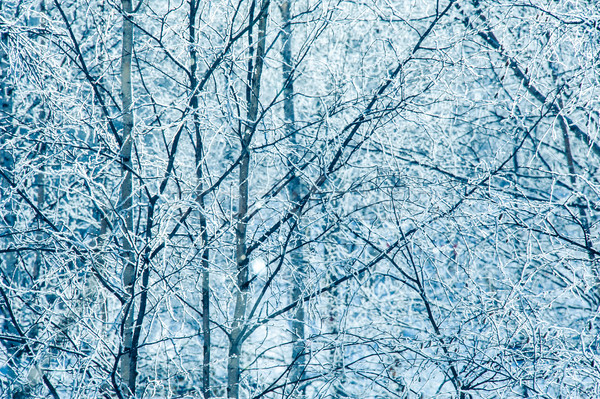 Landscape with trees covered by snow. Stock photo © EvgenyBashta