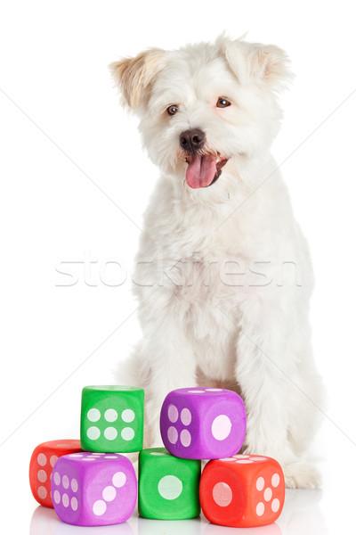 Engraçado cão brinquedos isolado branco cabelo Foto stock © EwaStudio