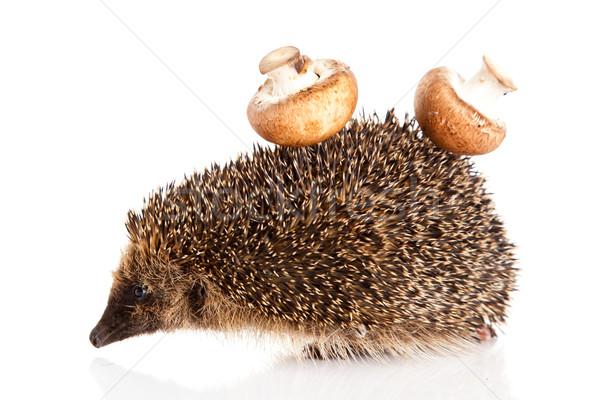 hedgehog on a white background.  Hedgehog with mushroom Stock photo © EwaStudio