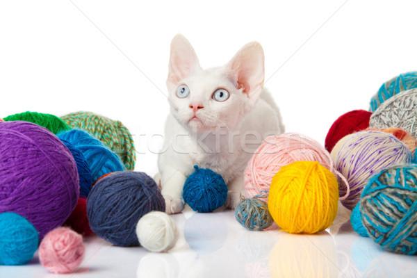 кошки белый котенка фон весело Сток-фото © EwaStudio
