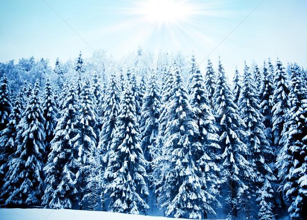 Bomen gedekt mooie winter landschap sneeuw Stockfoto © EwaStudio