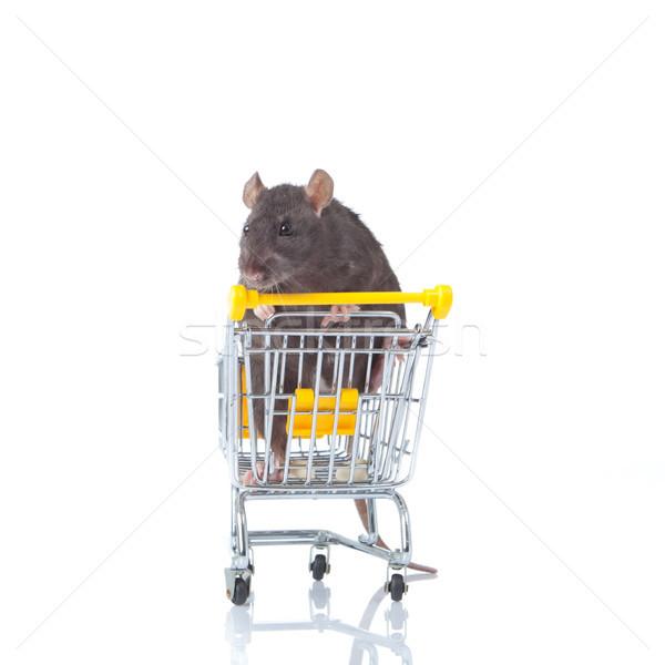 rat and the shopping cart. Stock photo © EwaStudio