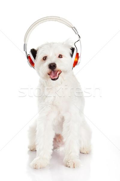 dog listening to music with headphones  isolated on white backgr Stock photo © EwaStudio