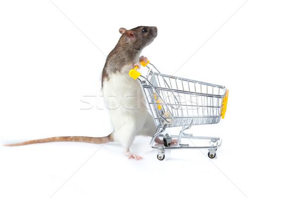 Foto stock: Rato · carrinho · de · compras · cesta · carro · mouse · animal