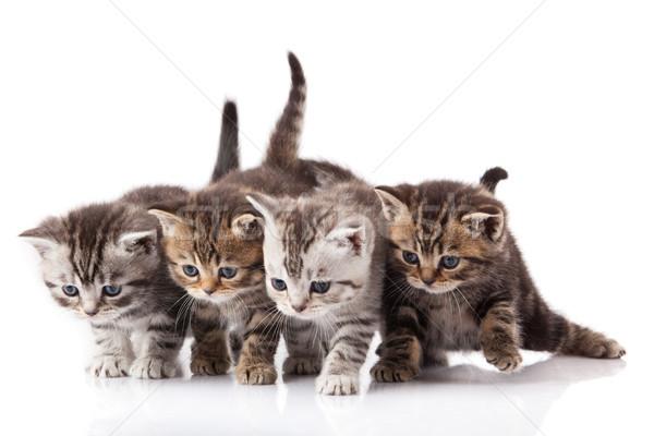 kittens on a white background Stock photo © EwaStudio