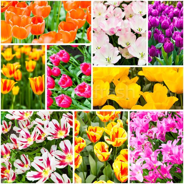 Tulpen collage lentebloemen natuur zomer groene Stockfoto © EwaStudio