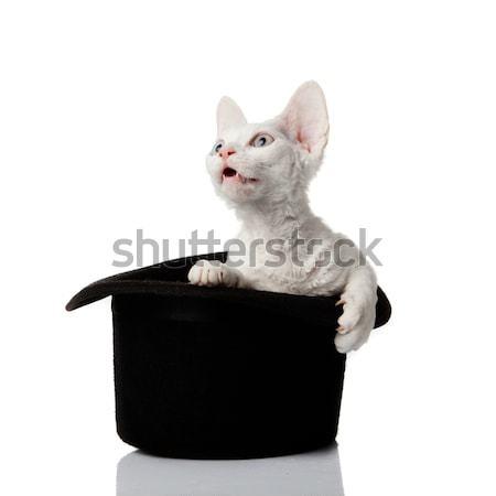 肖像 白 子猫 ペット かわいい ストックフォト © EwaStudio
