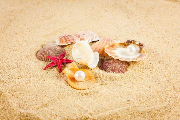 Parel exotisch zee shell schat Stockfoto © EwaStudio