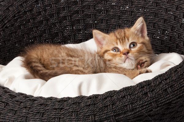 kitten sleeping in the basket Stock photo © EwaStudio