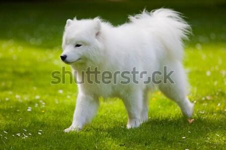 Kutya kert mező oktatás zöld fej Stock fotó © EwaStudio