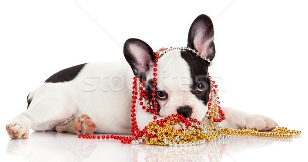 Adorable  French Bulldog  wearing  jewelery on white background. Stock photo © EwaStudio
