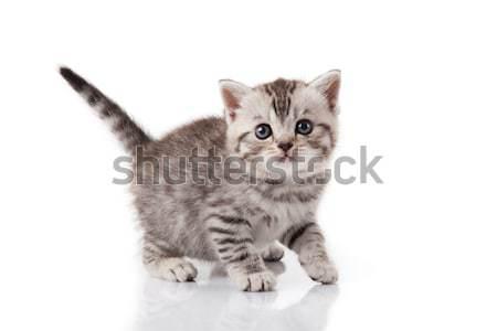 Kiscica fehér háttér vicces fiatal állat Stock fotó © EwaStudio