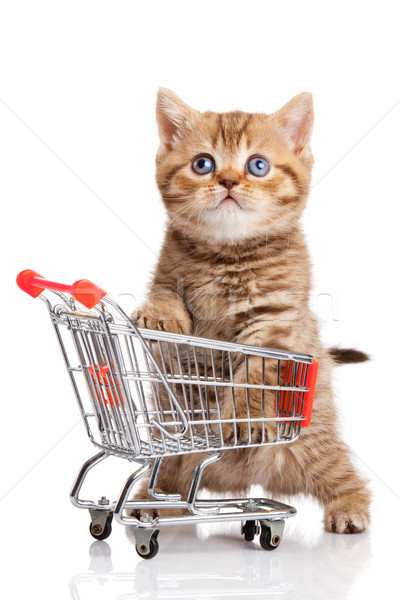 british cat with shopping cart isolated on white. kitten osolate Stock photo © EwaStudio