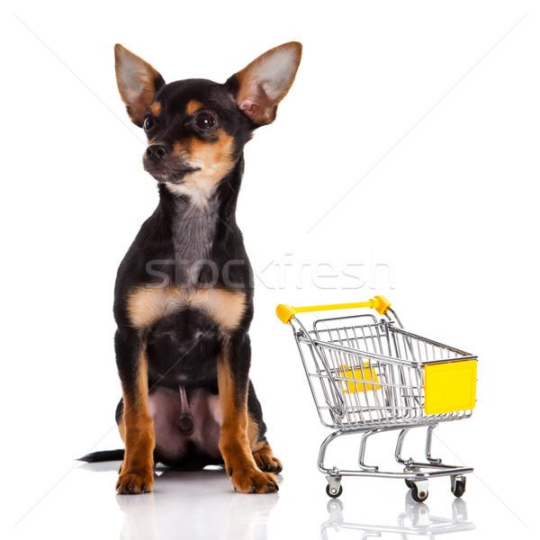 Kutya bevásárlókocsi piros fekete fehér állat Stock fotó © EwaStudio