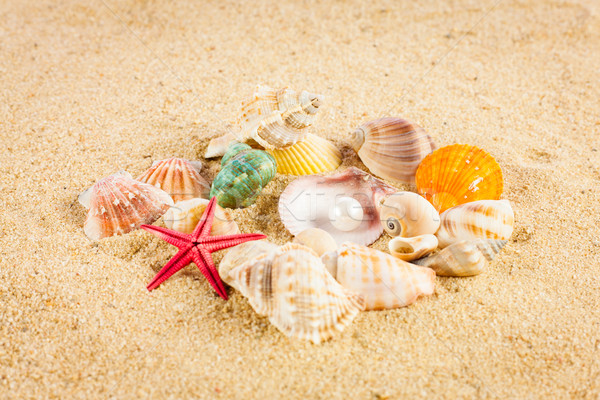 Pearl экзотический морем оболочки сокровище Сток-фото © EwaStudio