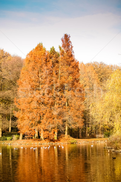 Színes ősz tájkép gyönyörű erdő égbolt Stock fotó © EwaStudio