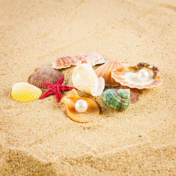 pearl on the seashell . The exotic sea shell . Treasure from the Stock photo © EwaStudio
