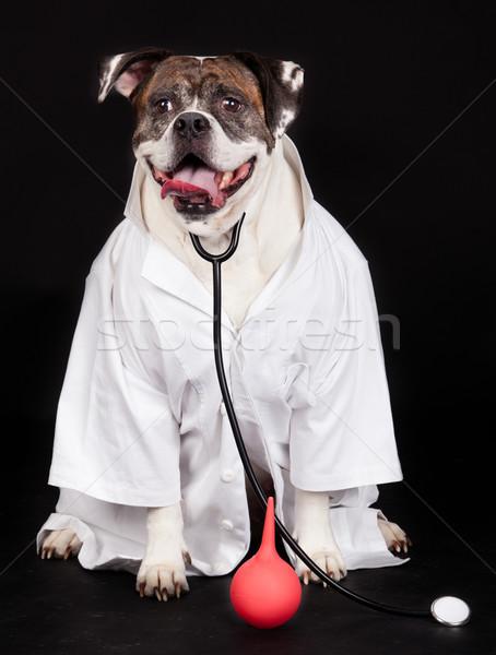 Amerikai bulldog kutya orvos kabát visel sztetoszkóp Stock fotó © EwaStudio