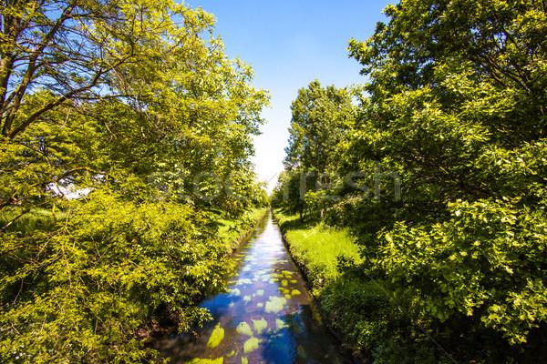 Groene veld bomen zomer landschap boom Stockfoto © EwaStudio