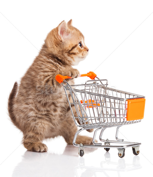 british cat with shopping cart isolated on white. kitten osolate Stock photo © EwaStudio